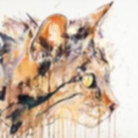 scottish-wild-cat.jpg