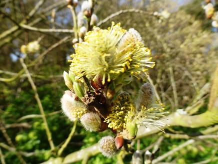 Friday 20th March 2020 - Buckinghamshire and ........ Coronavirus