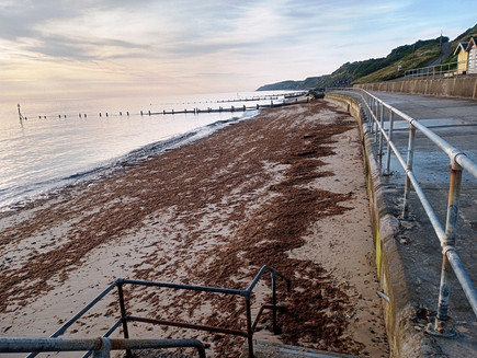 Wednesday 11th August 2021 - The Link Between, Red Seaweed and Amber