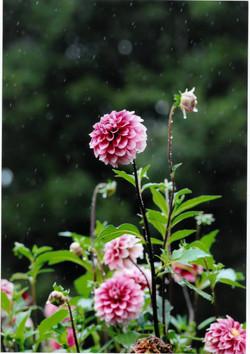 入選「雨」