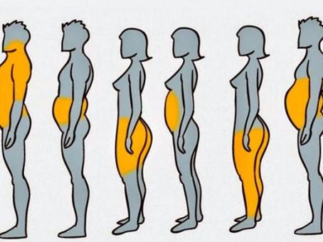 Где локализуются жировые отложения?