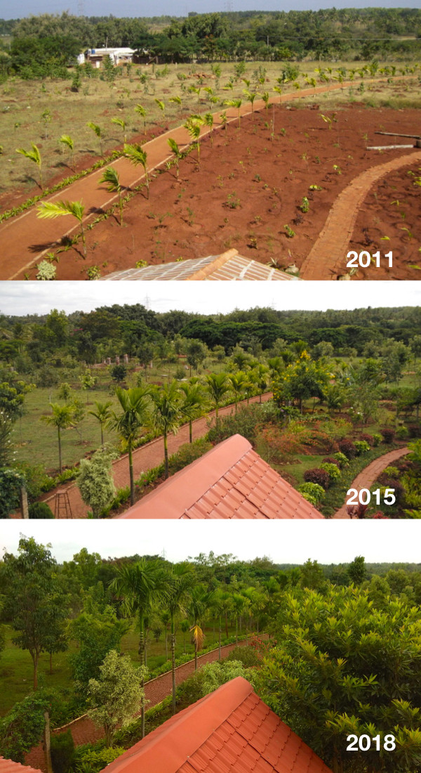 Earth Kitchen growth of forest