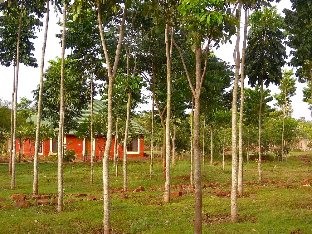 Hesaraghatta Earth Kitchen Homestay conservation nature Bangalore