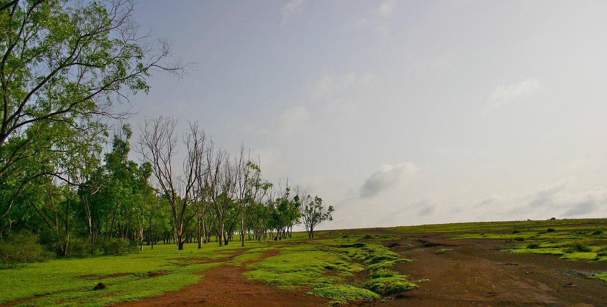 Hessarghatta grasslands a short walk from Earth Kitchen homestay farmstay