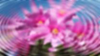 flower energy.png
