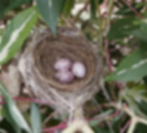 bulbul nest at Earth Kitchen homestay farmstay