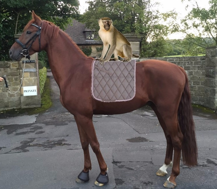 This was the first mock up that sparked the idea for DressMyHorse