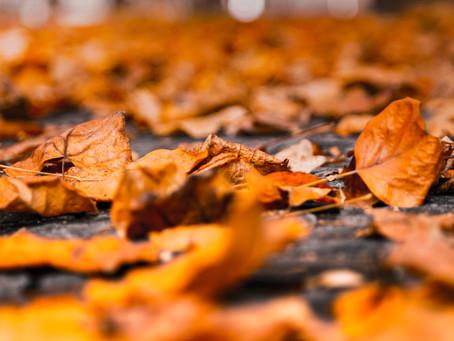 Autumn e Winter Blues: il Disturbo Affettivo Stagionale