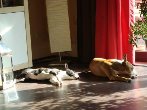 Paula & Mary beim Sonnenbad!
