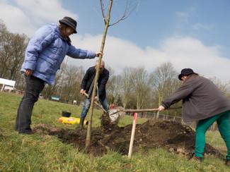 5 november: Zet het in uw agenda: Eerste boomplantdag