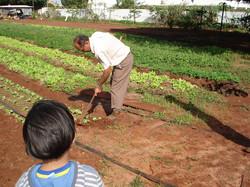 Alunos visitam e plantam horta
