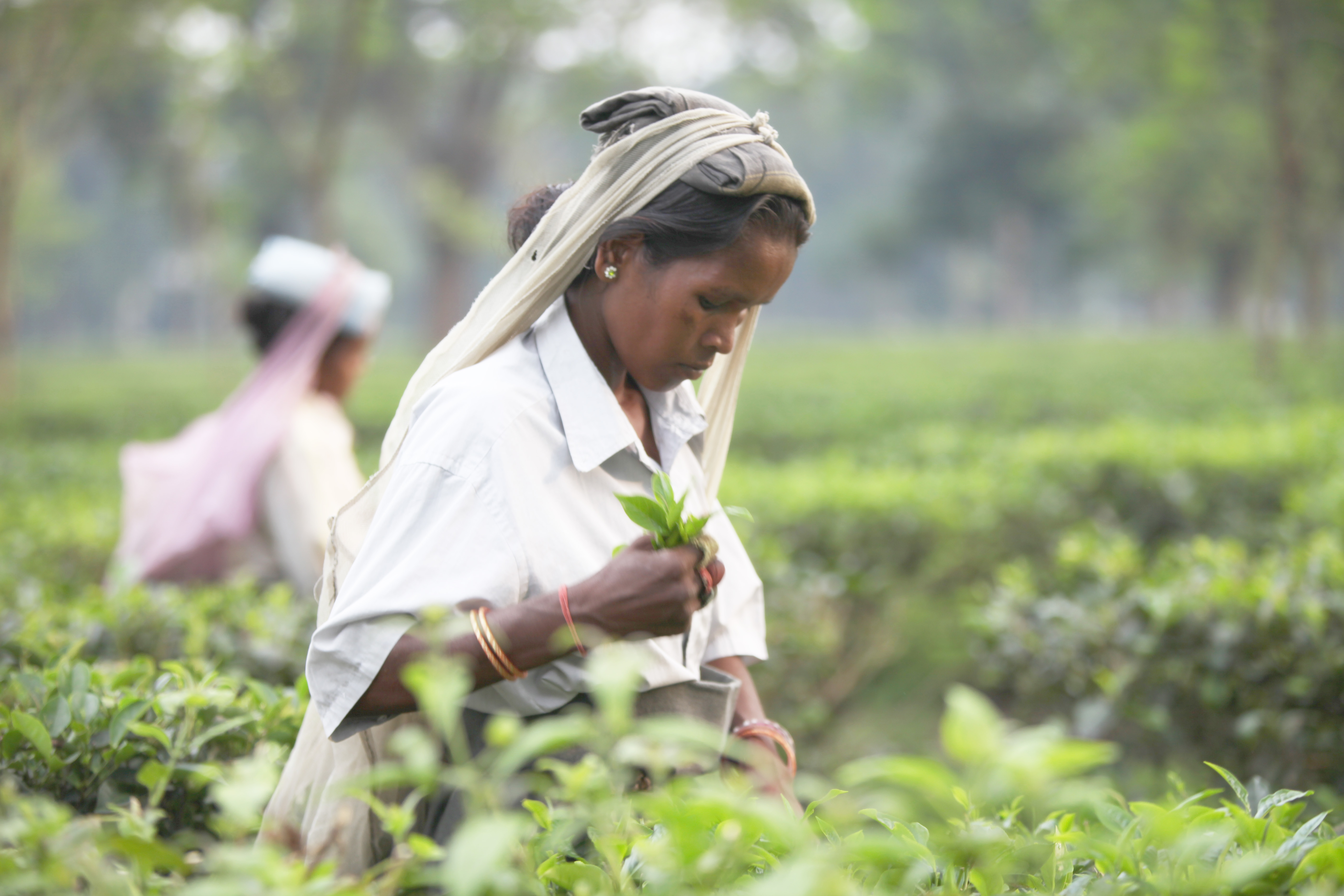 Inde sept 2012 (14)