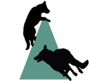 Obedience | Pacific Schutzhund Dog Sport Club | British Columbia