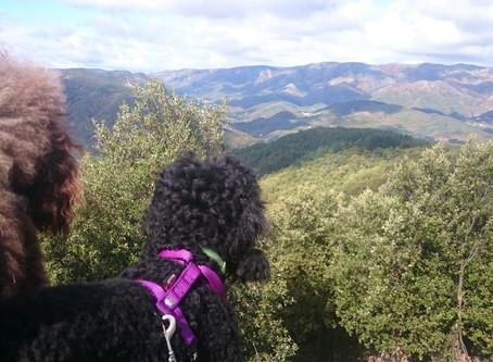 Partir en vacances avec son/ses chien(s): L'ARDÈCHE.