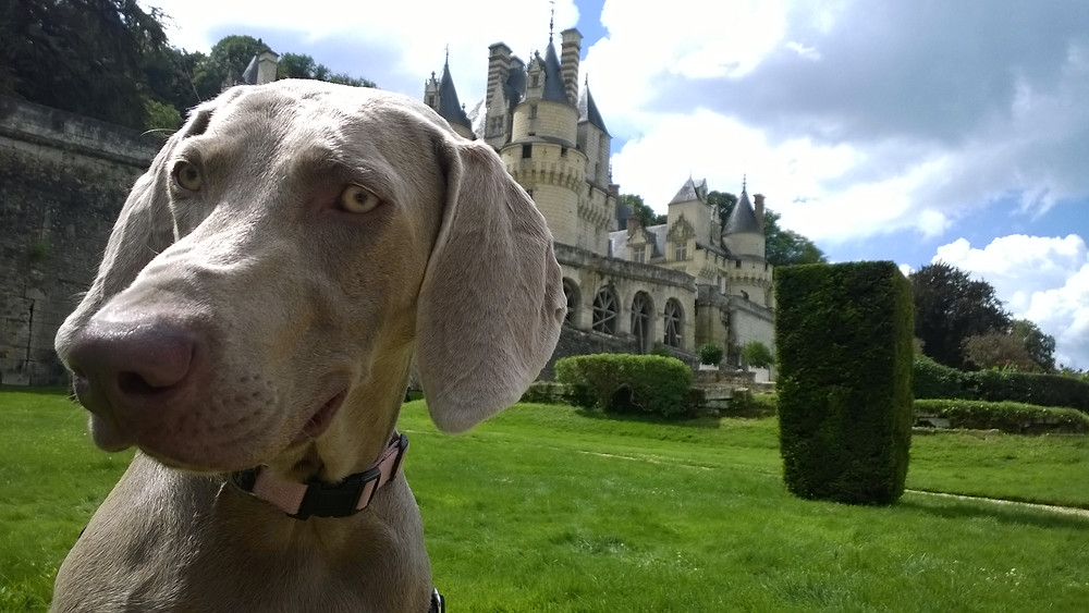 Château d'Ussé avec Lou