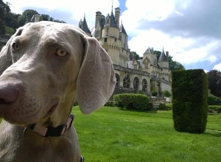Partir en vacances avec son/ses chien(s): L'INDRE et LOIRE.