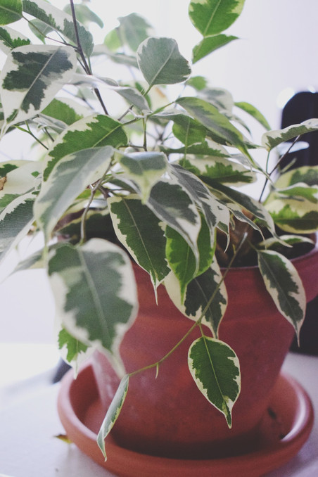 Make Your Home Healthier with Indoor Plants