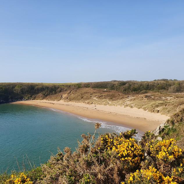 Barafundle Bay Pembrokeshire Coastal path