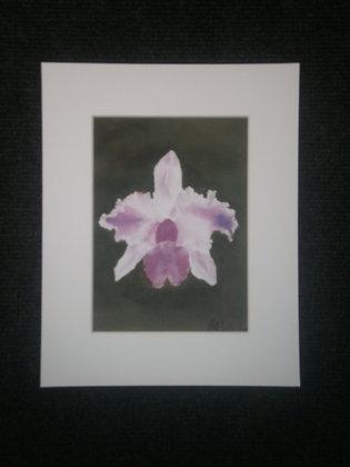 Jungle Orchid   (MP 211)