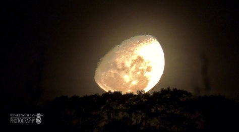 Deans Marsh Moonrise, Easter 2017