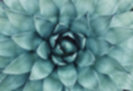 image2143.jpg