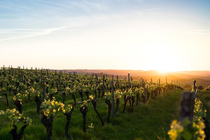 Languedoc Website.jpg