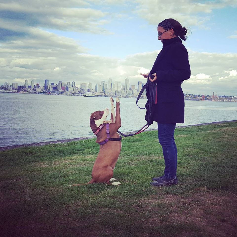 Happy pit bull and trainer at Alki in Seattle, WA