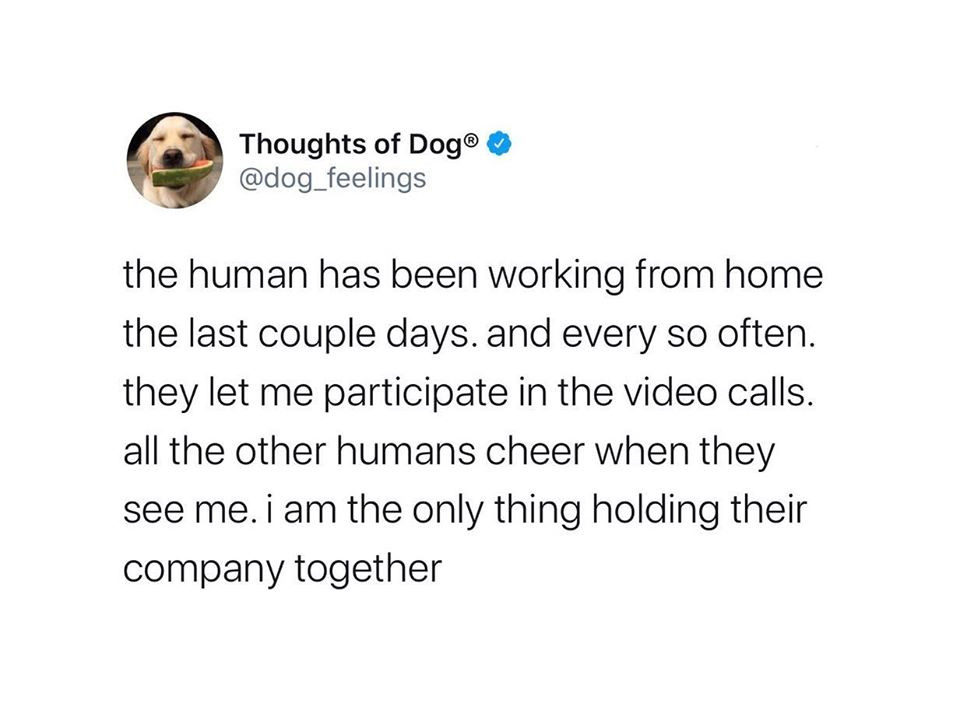 Thoughts of Dog @dog_feelings Twitter quote funny