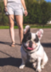 Adorable bulldog on leash with owner at the park