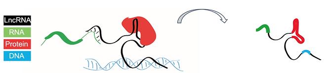 lncRNA_modular.png