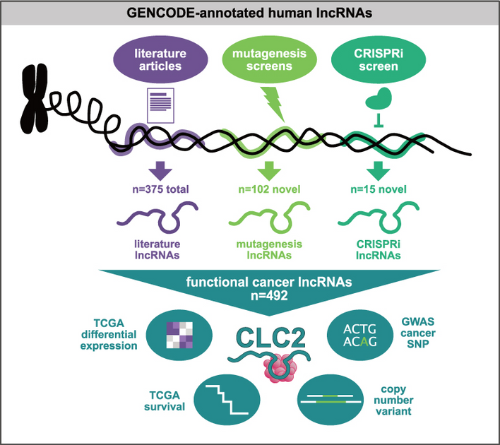 Cancer LncRNA Census 2: The Return