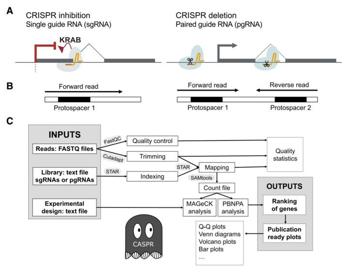 CASPR paper published!