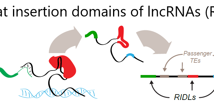 Our new manuscript already available in BioRxiv!