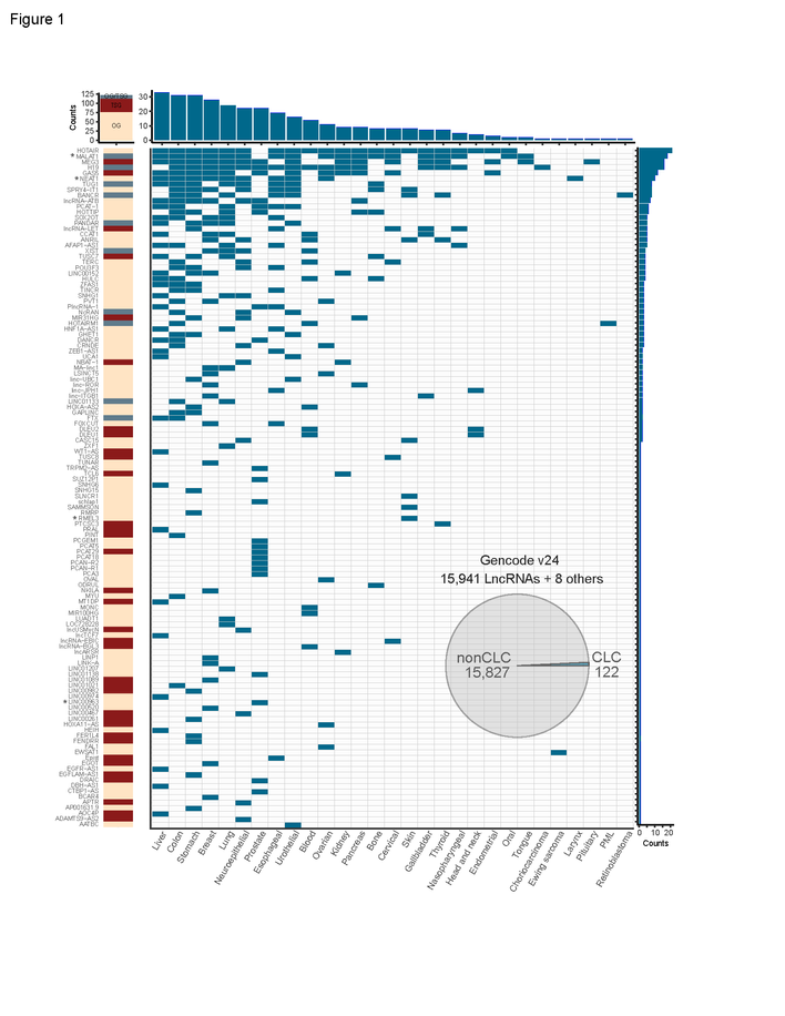 The Cancer LncRNA Census shows deep evolutionary conserved roles of lncRNAs in cancer