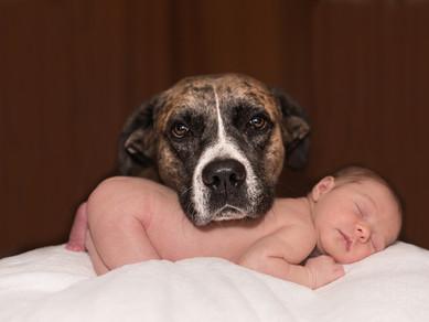 Hamilelik ve Evcil Hayvan Sahibi Olmak