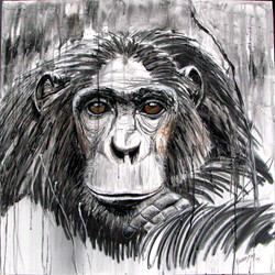 Chimpanzee_PAX 14Mar2010 B.jpg
