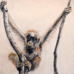 Orangutan_What Now_Yvonne Levenston.jpg
