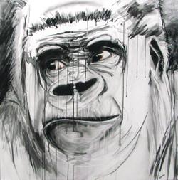 Gorilla_Hold the Phone!