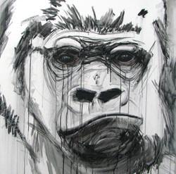 Gorilla_Kibabu.jpg