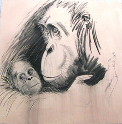 Orangutan_Who Looks After Us_915sq.jpg
