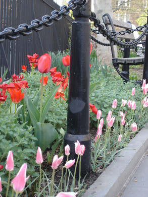 0014_2008 April AB Tulips at south end.J