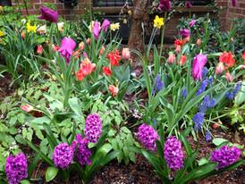 Spring Flowering Bulb Displays