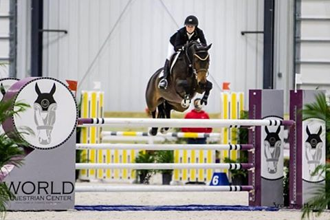 Dexter in the jump off in the Grand Prix last week at WEC!  #windridgefarm #2nd #grandprix #showjump