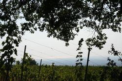 panorama dalla vigna
