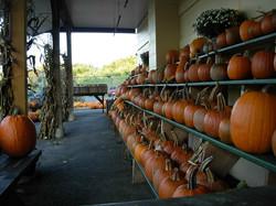Store Pumpkins