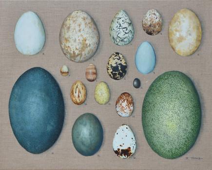 A Selection of Australian Bird Eggs