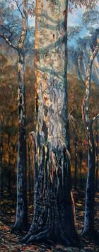 Bushfire Series