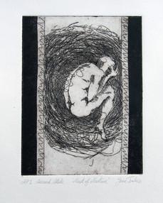 3 Nest of Nurture.jpg