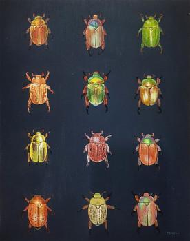 A Selection of Australian Christmas Beetles
