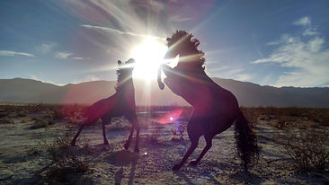 two-horses-playing-in-the-sunlight_800.j